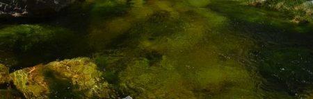 Salmon pool 450